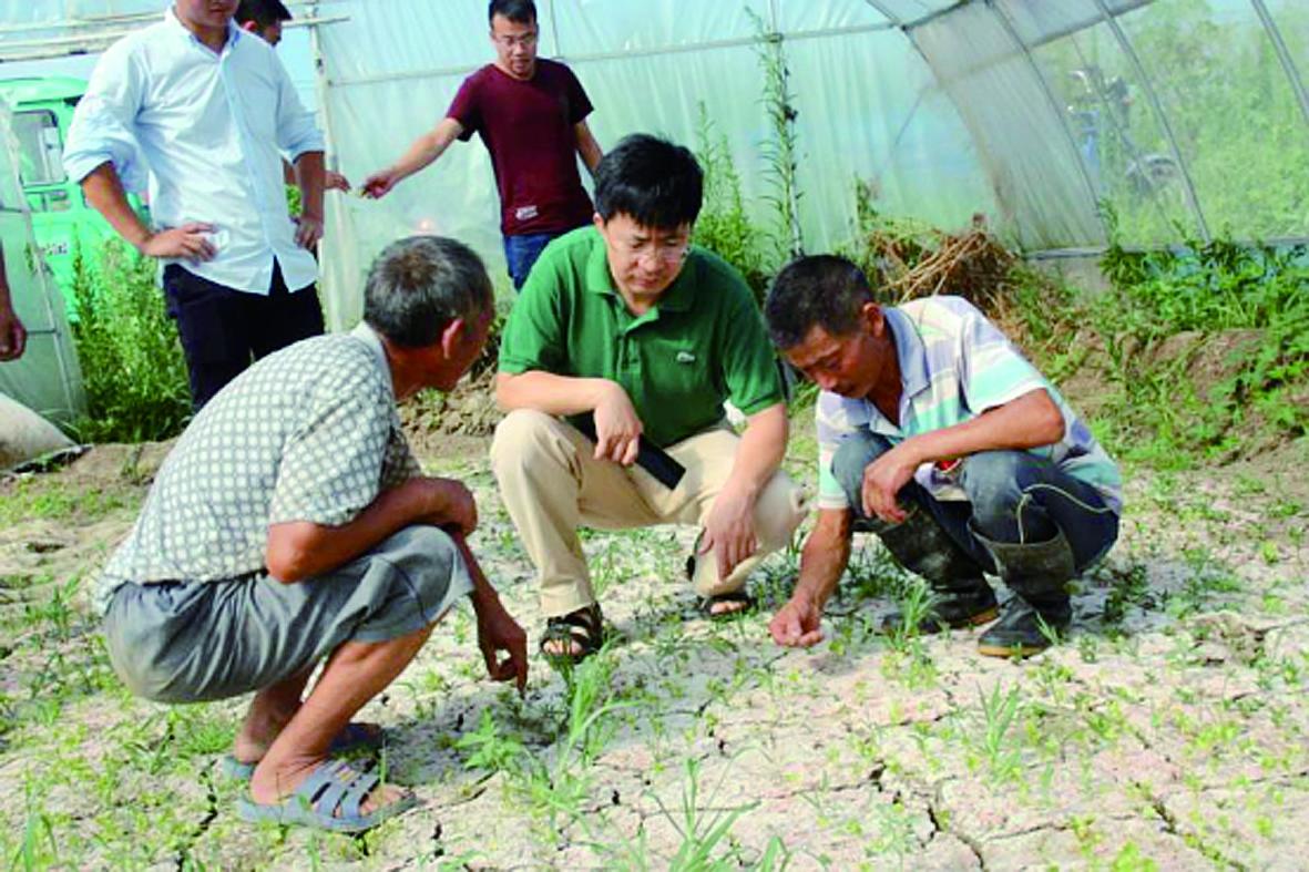 中国农业大学胡树文教授(中)在南通考察大棚土壤状况