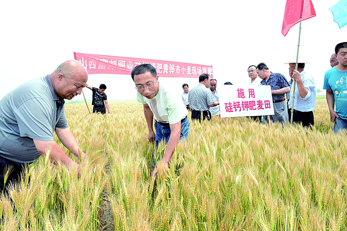 专家在小麦地里测产